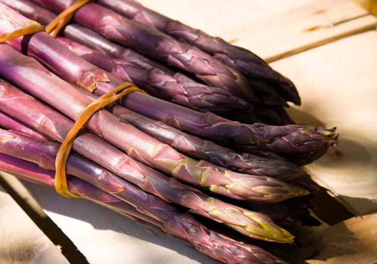 Asparago-violetto-di-Albenga